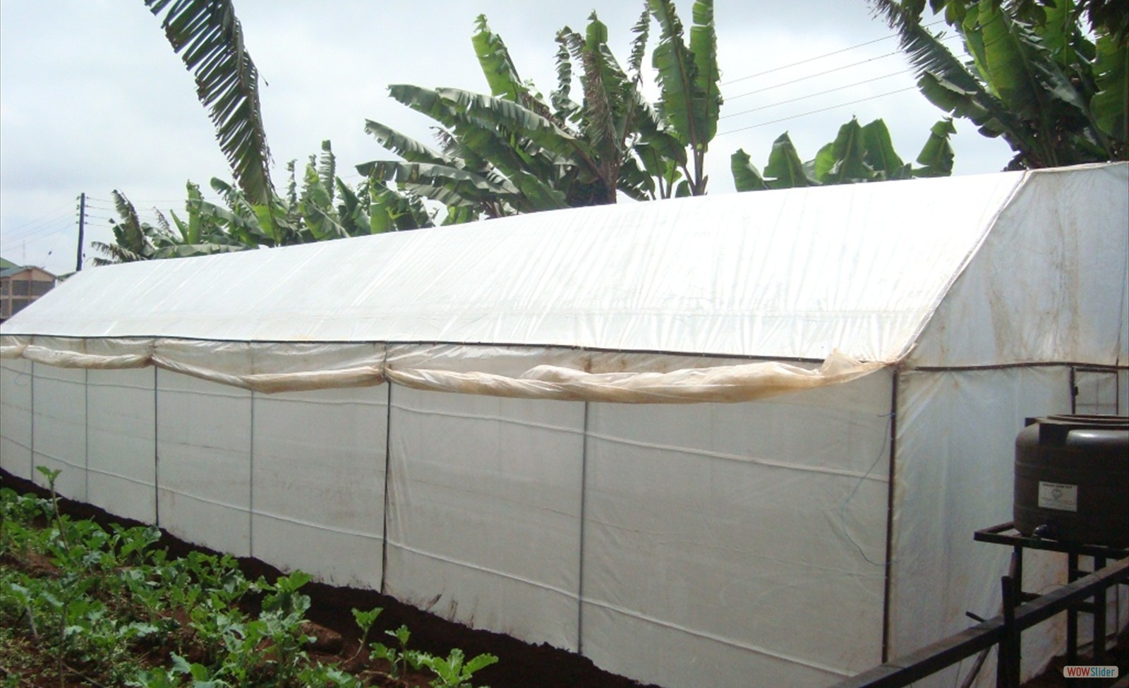 Low cost Metallic  Greenhouse